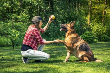 Dog Training: Become A Dog Trainer