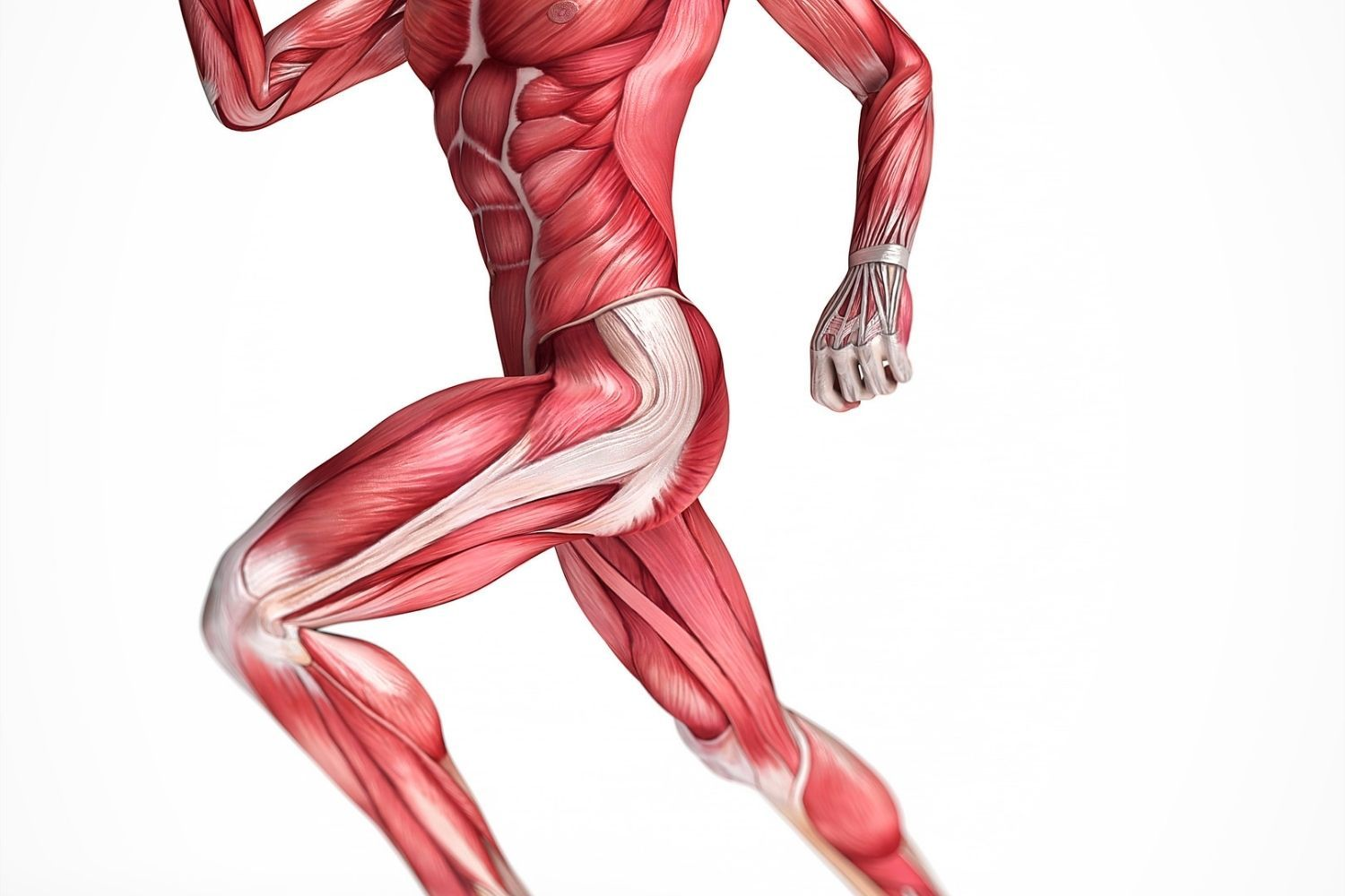 Expand your skills and learn the foundations of Kinesiology.